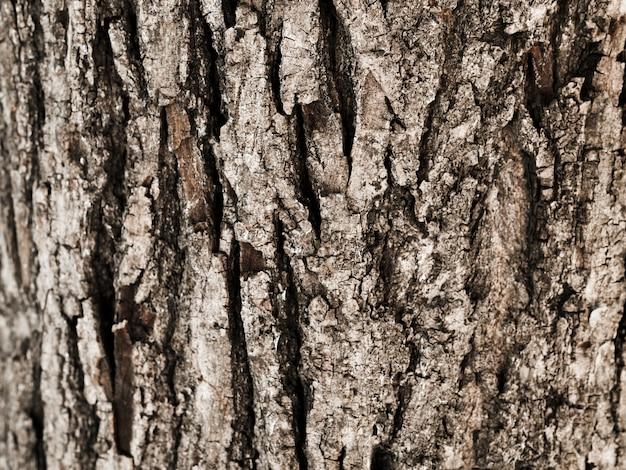 Primo piano del tronco di albero strutturato