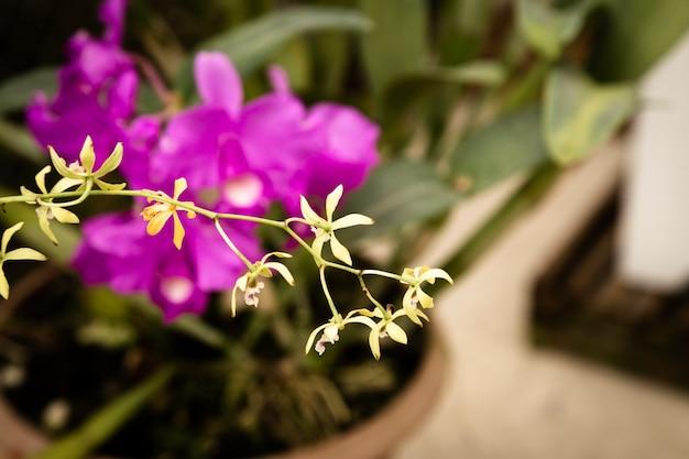 Primo piano delicato del fiore con fondo vago