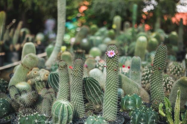 Primo piano dell'albero di cactus