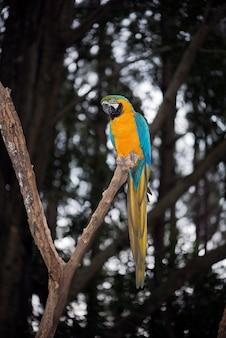 Primo piano dell'ara blu e gialla o del caninde dell'arara