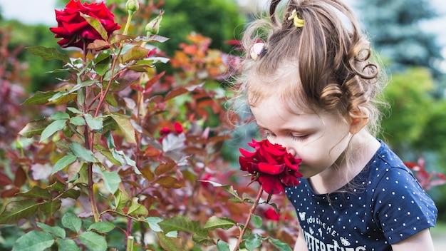 Primo piano della bambina che odora il fiore della rosa rossa nel parco