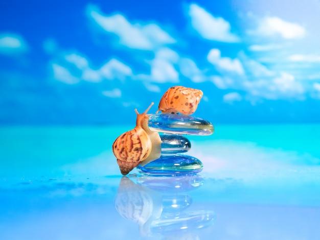 Primo piano della conchiglia sulla spiaggia. pila di pietre del ciottolo e plumeria sulla spiaggia su una superficie di legno. concetto zen, spa, estate, spiaggia, mare.
