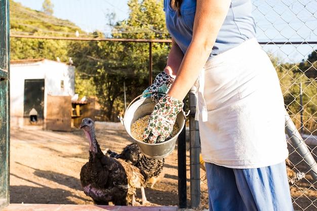 Primo piano della donna che alimenta il seme del cereale al pollo nell'azienda agricola