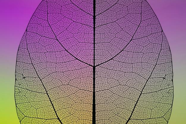 Primo piano della foglia variopinta di autunno