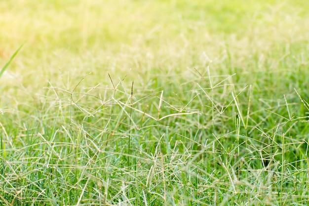 Primo piano della foglia verde su fondo vago in giardino