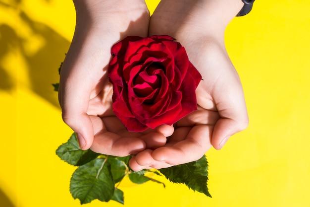 Primo piano della mano con la rosa rossa, foglie verdi.