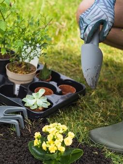 Primo piano della mano del giardiniere con alberello vivido per piantare