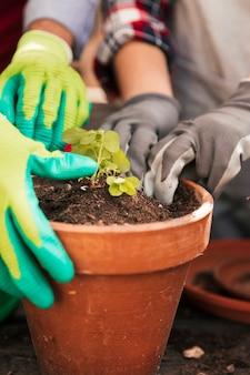 Primo piano della mano del giardiniere femminile e maschio che pianta la piantina nel vaso
