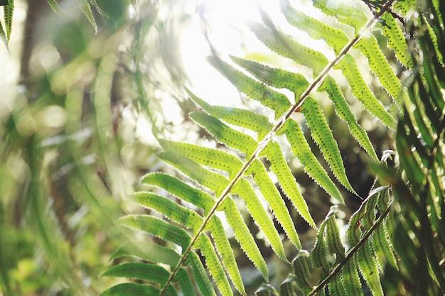 Primo piano della pianta della felce della foglia