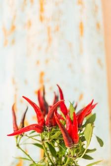 Primo piano della pianta rossa del peperoncino rosso contro priorità bassa strutturata