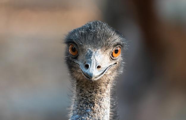 Primo piano della testa di un emu
