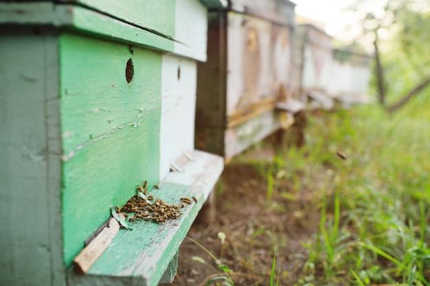 Primo piano delle api della famiglia sull'alveare di legno del fondo