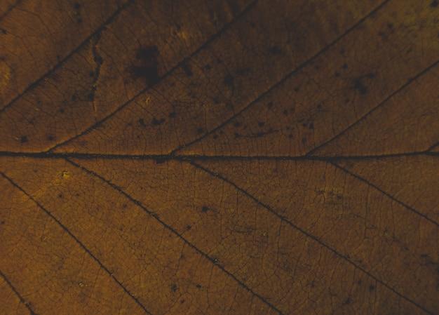 Primo piano delle belle trame di una foglia