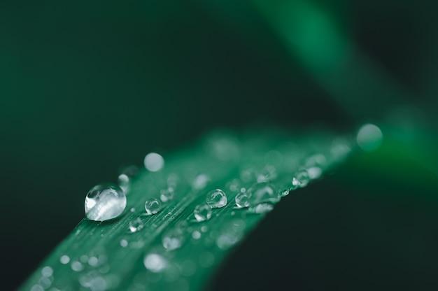 Primo piano delle goccioline di acqua sulle foglie verde scuro