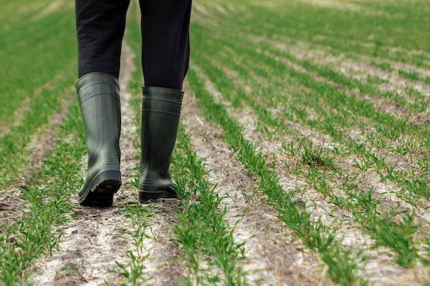 Primo piano delle mani, della zappa e del campo del coltivatore in primavera