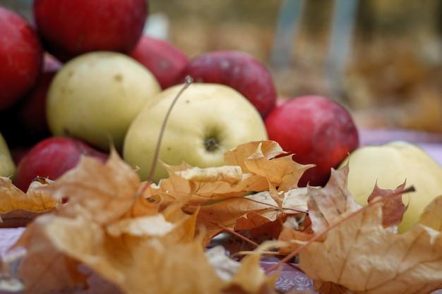 Primo piano delle mele rosse e gialle che si trovano in foglie di acero cadute gialle