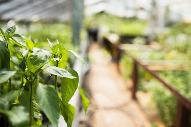 Primo piano delle piante in serra
