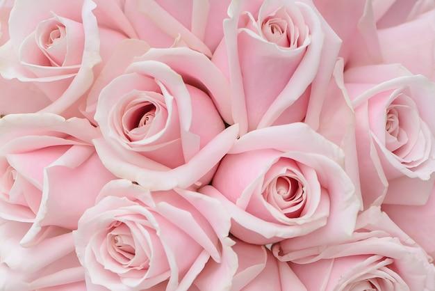 Primo piano delle rose rosa