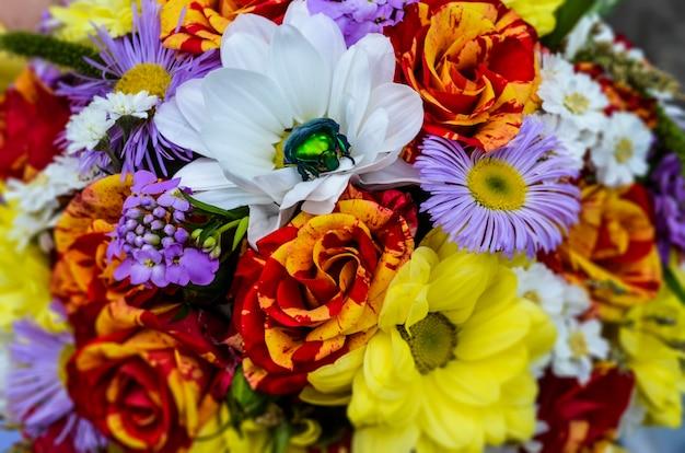 Primo piano dello scarabeo verde di multi fiori di colore