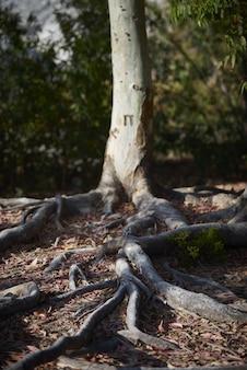 Primo piano di angolo basso delle radici dell'albero nella terra circondata dalle foglie e dalla pianta sotto luce solare