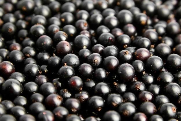 Primo piano di bacche fresche di ribes nero, sfondo di cibo vegano sano, cibo di vitamine estive