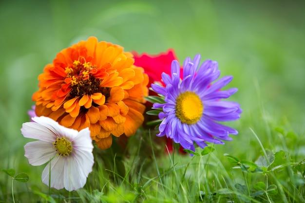 Primo piano di bei fiori luminosi di autunno