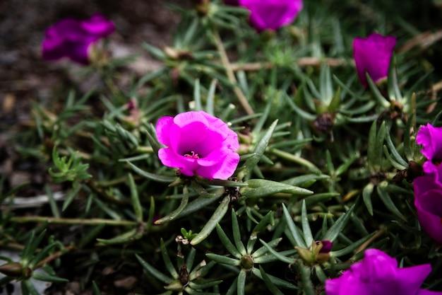 Primo piano di bei fiori viola
