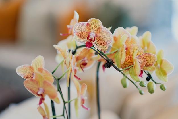 Primo piano di bella orchidea arancio
