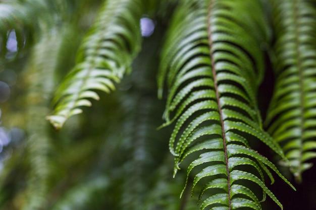 Primo piano di belle foglie di felce