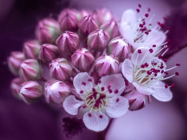 Primo piano di bellissimi fiori. sfondo - sfumature viola.
