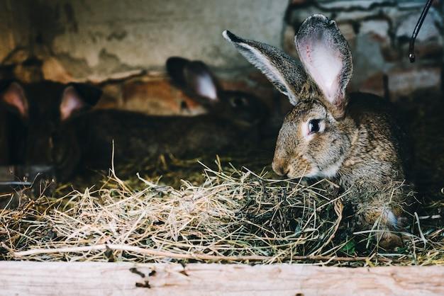 Primo piano di coniglio che mangia erba