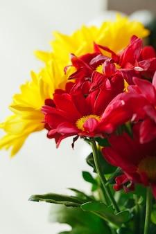 Primo piano di crisantemi