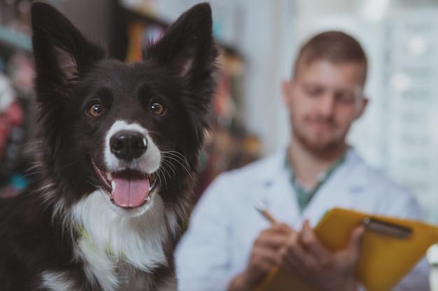 Primo piano di felice cane sano guardando alla telecamera con la lingua fuori,