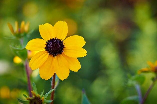 Primo piano di fiore in fiore