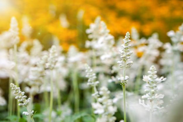 Primo piano di fiori bianchi