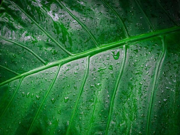 Primo piano di foglie verdi