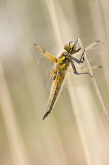 Primo piano di libellula