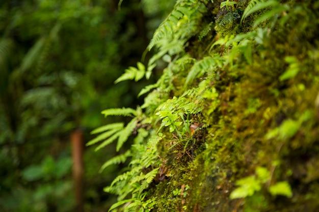 Primo piano di muschio che cresce sul tronco di albero in foresta tropicale