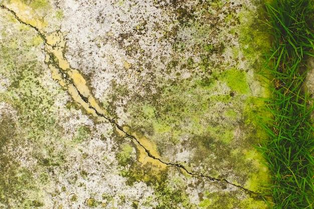 Primo piano di muschio sulla parete della crepa del cemento bianco e sulla vernice sbucciata causata da acqua e dalla luce solare. sbucciare la parete di vernice bianca con macchia nera. trama di sfondo.