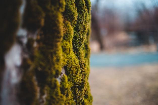 Primo piano di muschio verde
