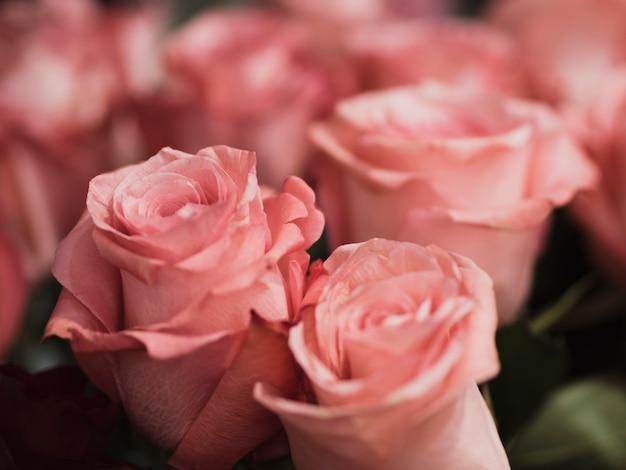 Primo piano di rose romantiche