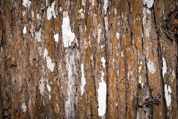 Primo piano di struttura del tronco di albero