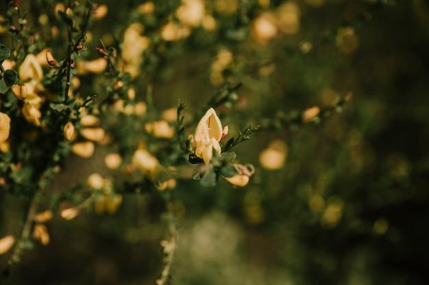 Primo piano di un bel fiore delicato