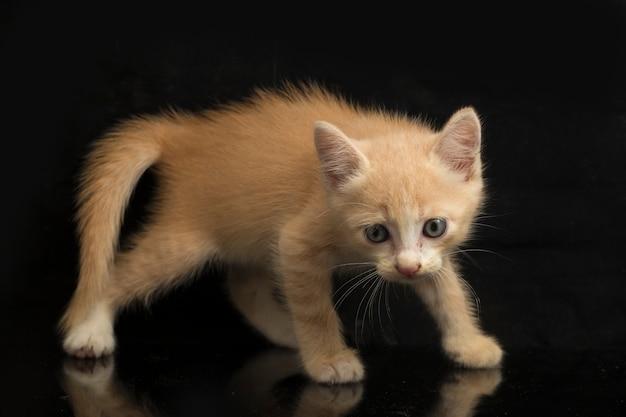 Primo piano di un bel gattino arancione