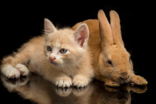 Primo piano di un bellissimo gattino arancione e un simpatico coniglio