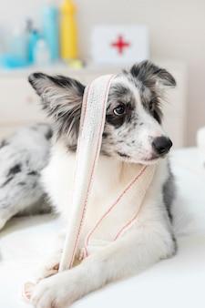 Primo piano di un cane con benda sul tavolo