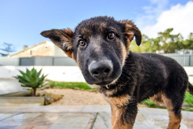 Primo piano di un cane marrone in un giardino sotto la luce del sole con uno sfondo sfocato