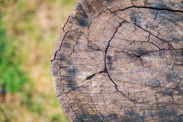 Primo piano di un ceppo di albero.