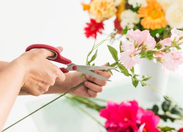 Primo piano di un gambo femminile del fiore del taglio manuale del fiorista con le forbici