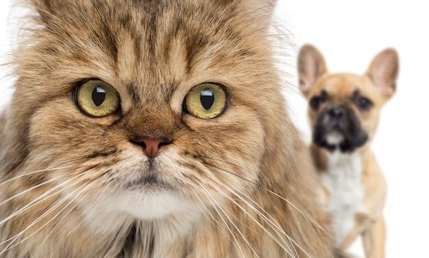 Primo piano di un gatto e di un cane che si nascondono dietro isolato su bianco